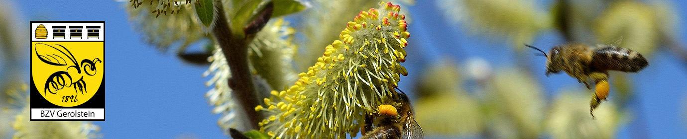 Bienenzuchtverein Gerolstein